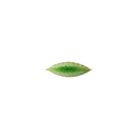 Riviera Laurel Leaf Set