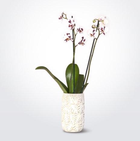 Cream Clay Vase